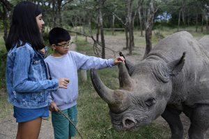 family rhino