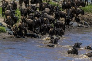 wildebeest mara crossing