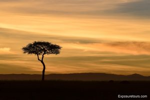 sunrise safari-1