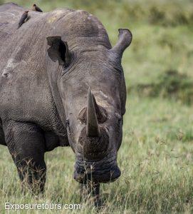 Rhino lens test
