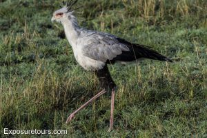 Secretary Bird lens test