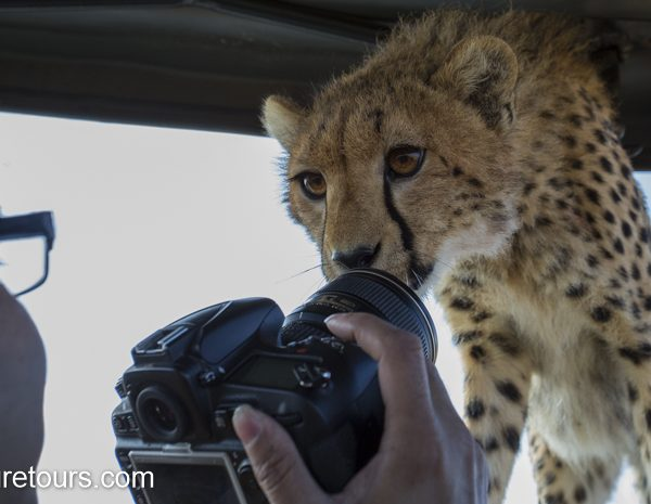 cheetah kisses my lens