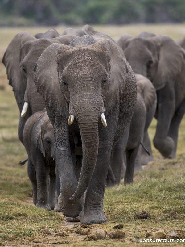 elephant exposure tours