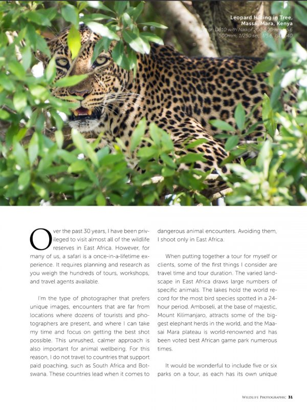 wildlife photographic feature